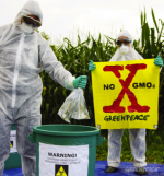 Greenpeace activists quarantine illegal GE crops in Italy